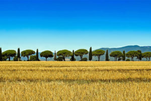 tuscany-motorcycle-tours-gallery-countryside-landscape-7